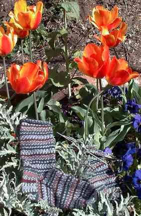 Regia socks in the garden